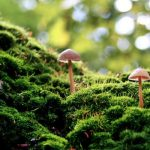 slide-mushroom2